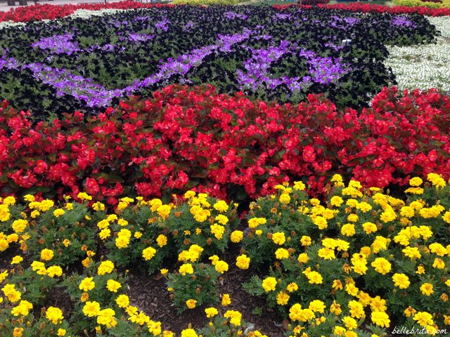 Even Cedar Point's flowers are incredible
