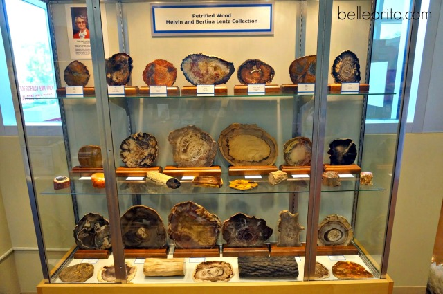 Petrified wood on display at the Colorado School of Mines Geology Museum in Golden, Colorado #travel #science