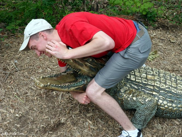 Wrestling gators at the Cincinnati Zoo! | Belle Brita