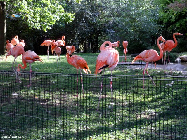 For my second date with my husband, we went to the Columbus Zoo! | Belle Brita