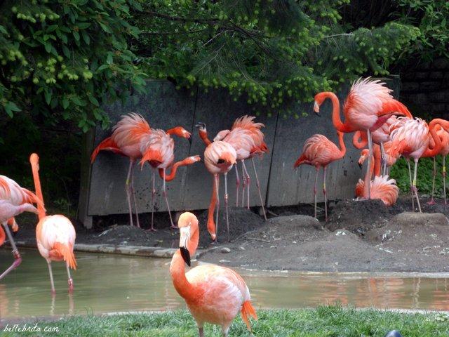 Bright pink flamingos! | Belle Brita