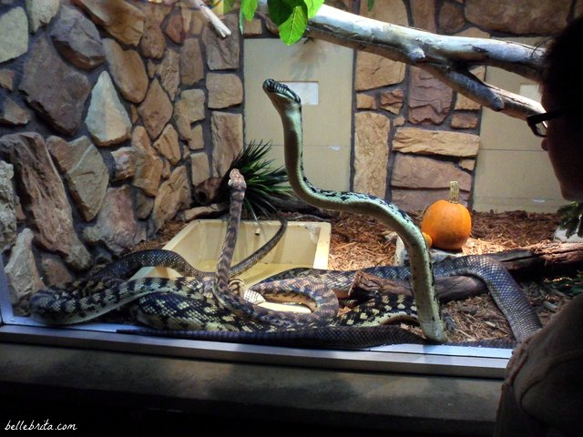 Love the Halloween decorations at the Columbus Zoo! | Belle Brita