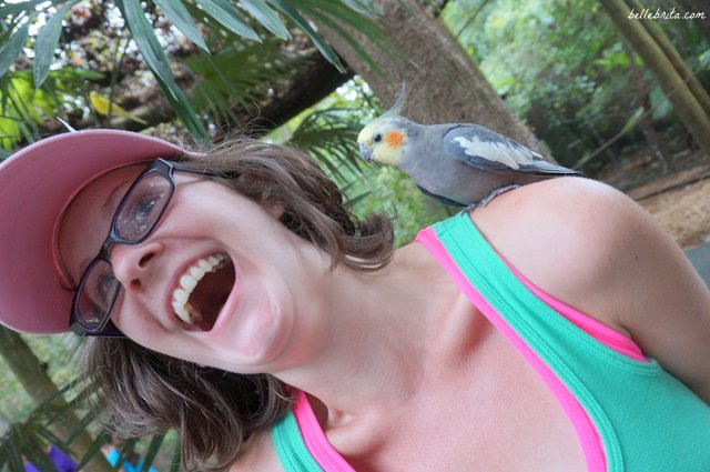 Animal encounters at Wild Adventures | Belle Brita