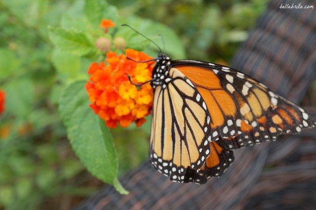 Butterfly Garden, Wild Adventures, Valdosta, GA | Belle Brita