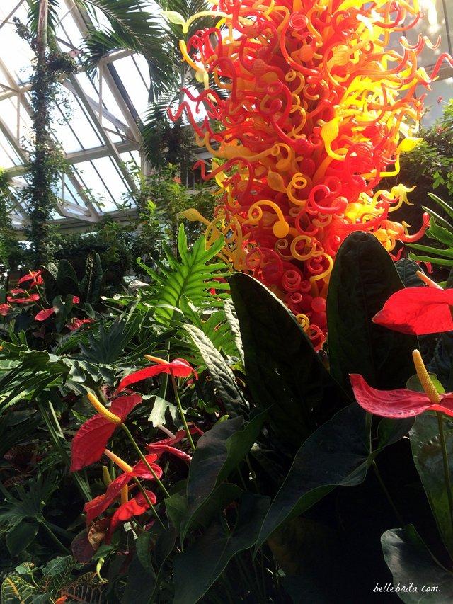 Chihuly at Franklin Park Conservatory | Belle Brita