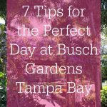 7 Tips for the Perfect Day at Busch Gardens Tampa Bay
