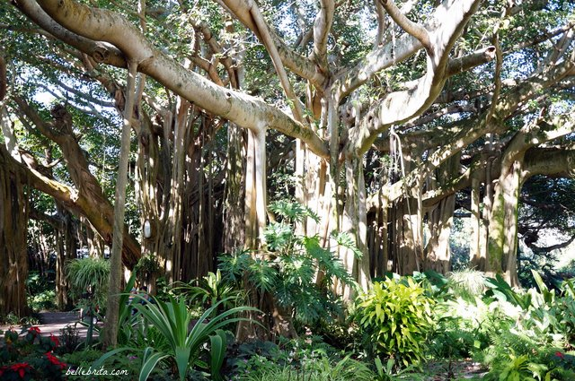 This incredible Banyan Tree dates back to 1939. Find it at Cypress Gardens, part of LEGOLAND Florida Resort | Belle Brita