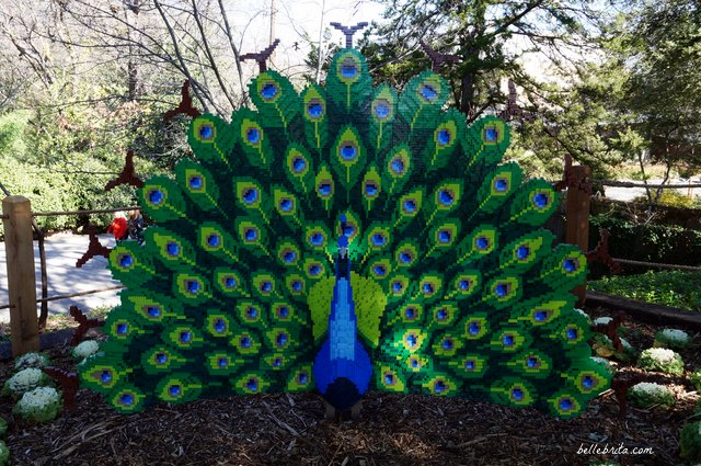 A beautiful LEGO peacock at the Dallas Zoo | Belle Brita