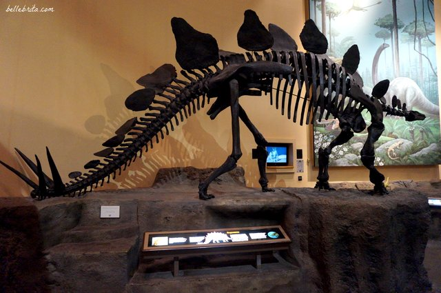 Explore natural history at the Fernbank Museum in Atlanta, like this model of a dinosaur fossil. | Belle Brita