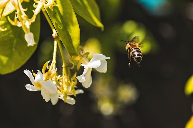 Pollinators are an important part of our environment! | Belle Brita