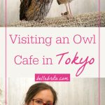 "Two images with owls. Text overlay reads: ""Visiting an Owl Cafe in Tokyo"""