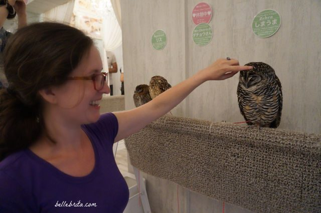 Woman petting an owl in Akiba Fukurou Owl Cafe