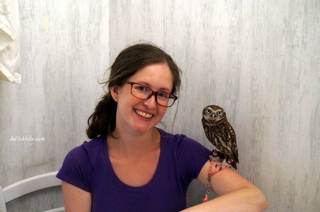 Woman with an owl on her arm in Akiba Fukurou Owl Cafe